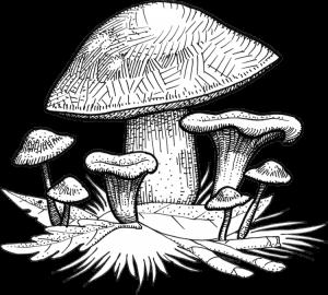 Assortiment de champignons : cèpes, mousserons et girolles